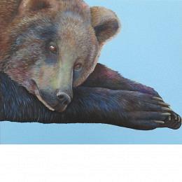 Träumender Bär